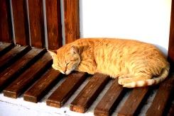 Cat on Kușadası Güvercinada- Pigeon Island