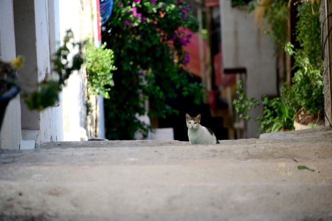 Cat in Kușadası old town