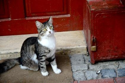 Cat in Kușadası old town