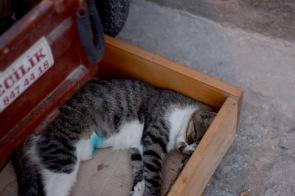 Kușadası cat in a box