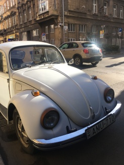 Terézváros beetle