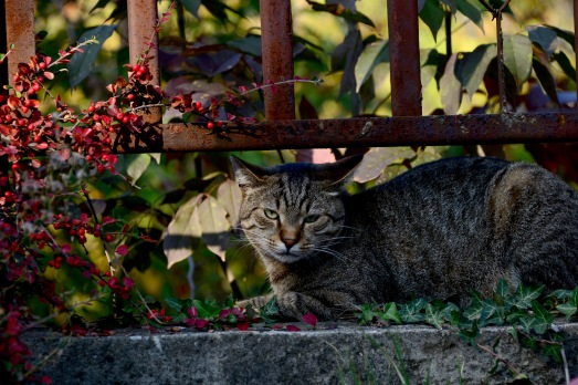 Normafa cat is not happy
