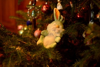 Christmas 2019- Dalma the Rabbit