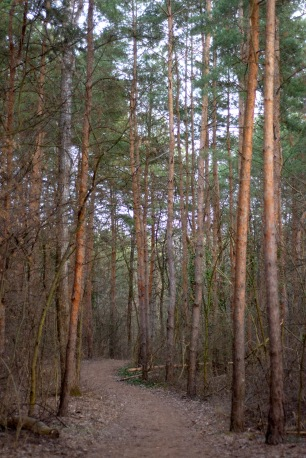 Farkas-erdő