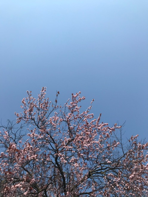 Nevertheless it's spring