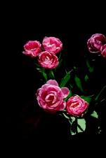 Quarantine flowers