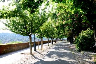 Tóth Árpád alley