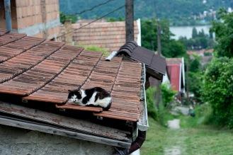 Grumpiest cat in Nagymaros