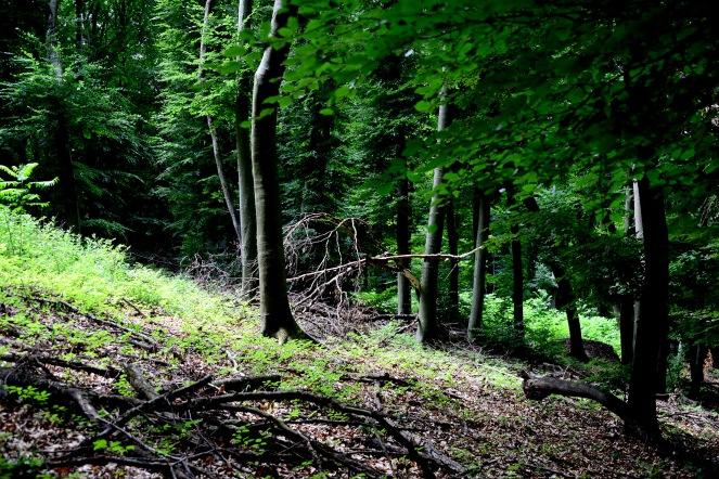 Nagymaros to Zebegény trail